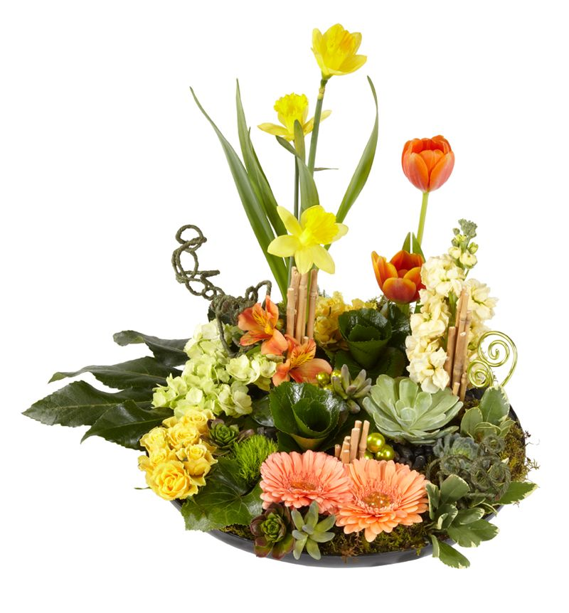 Super cool spring dish garden with succulents perfect for mothers buds n bloom florist wisconsin green bay de pere same day flower delivery shop send flowers bouquets wedding flowers funeral flowers mightylinksfo