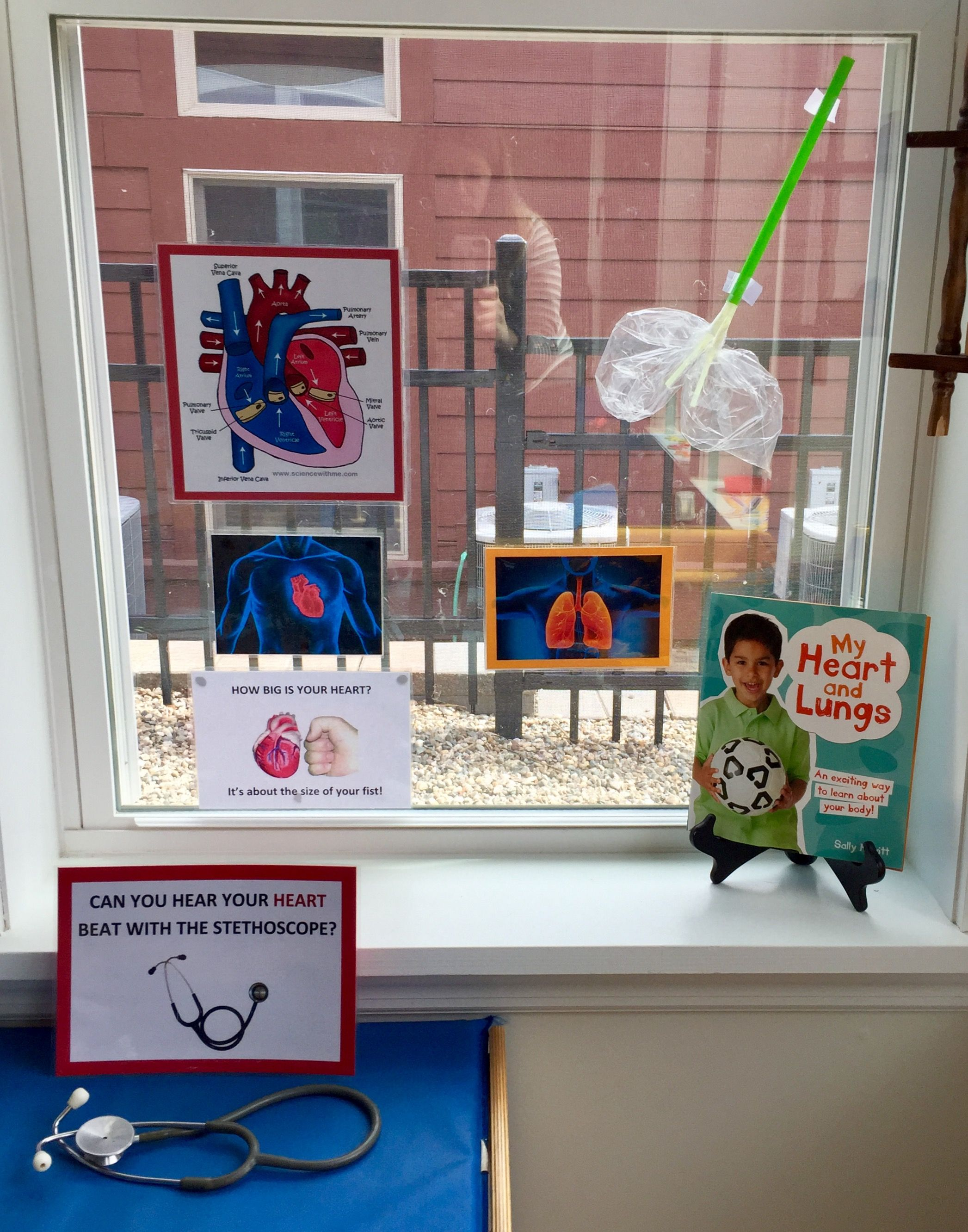 Preschool Body Unit Heart And Lungs Science With Images