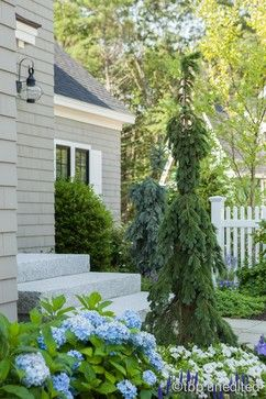 Endless Summer Hydrangea Design Ideas Pictures Remodel And Decor Courtyard Landscaping Weeping White Spruce House Landscape