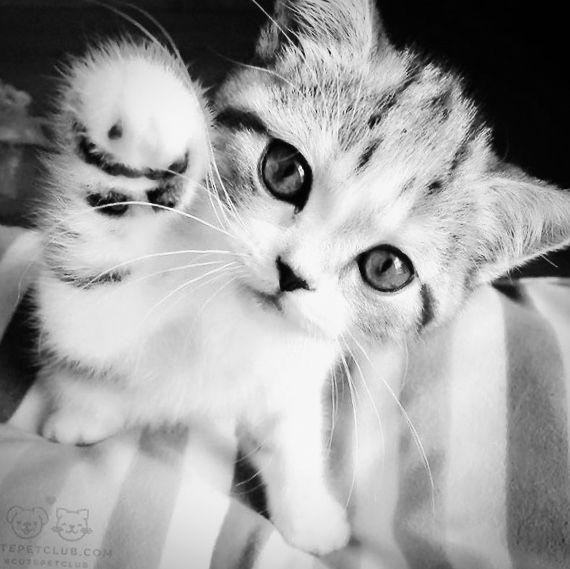 #cats #catlovers #cat #catsofinstagram #catoftheday #