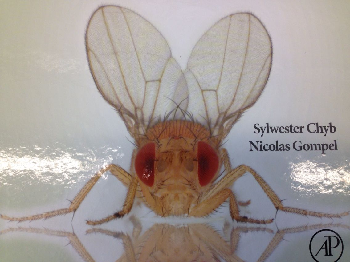 Drosophila pic