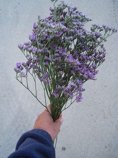 Accent Flower Limonium Maine Blue Flower Bouquet Wedding Lavender Flowers Single Flower