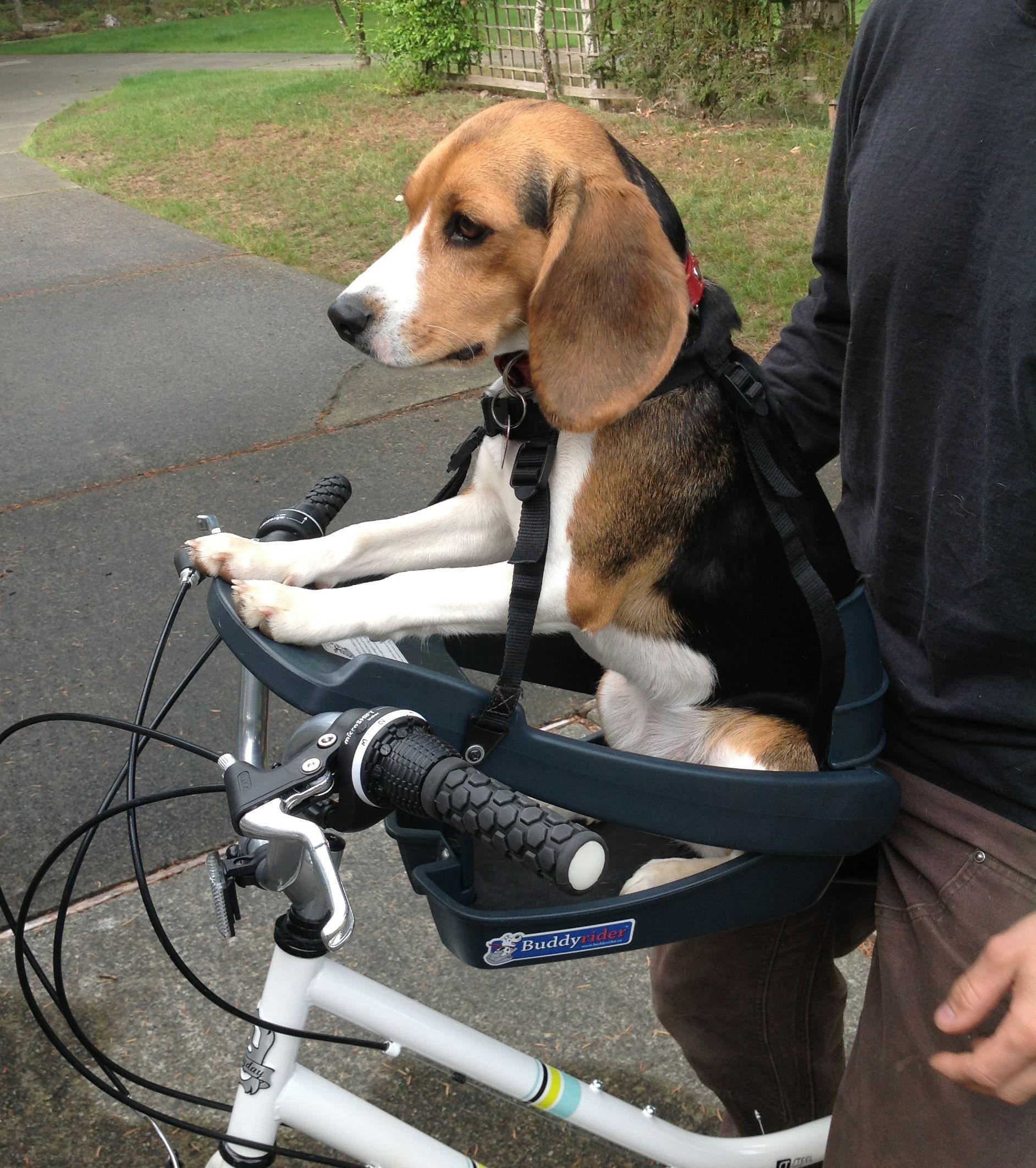 Pin By The Dog Outdoors On Buddyrider Dog Bike Seat Biking With