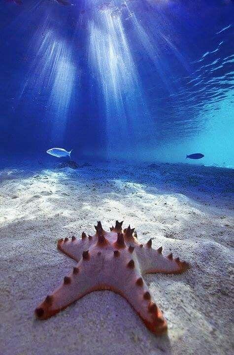 Linda estrella d mar