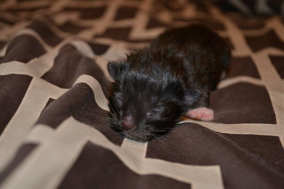 Nyx - born June 26, 2013