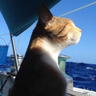 """""""She has to go out of a cat comfort zone often,"""" Clark said of Amelia. """"But I think she now understands that I will keep her safe and she will have a lot of fun in the end. She makes Swell feel much more like a home."""" 