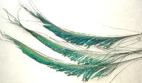 Pin On Feathers