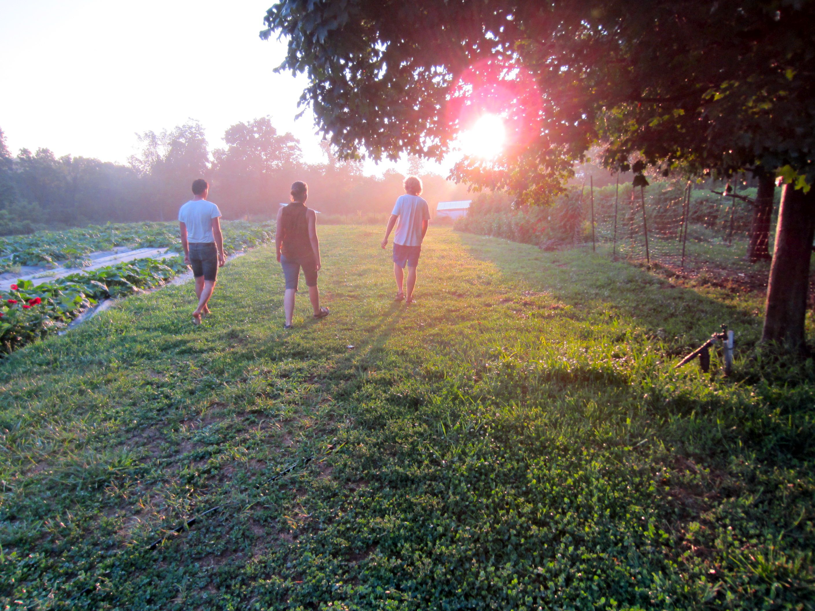 WWOOF-USA: Volunteer on farms around US and get free place