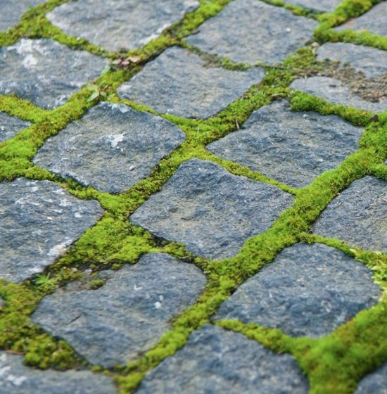 I Want To Grow Moss Between My Stepping Stones In The Back Yard