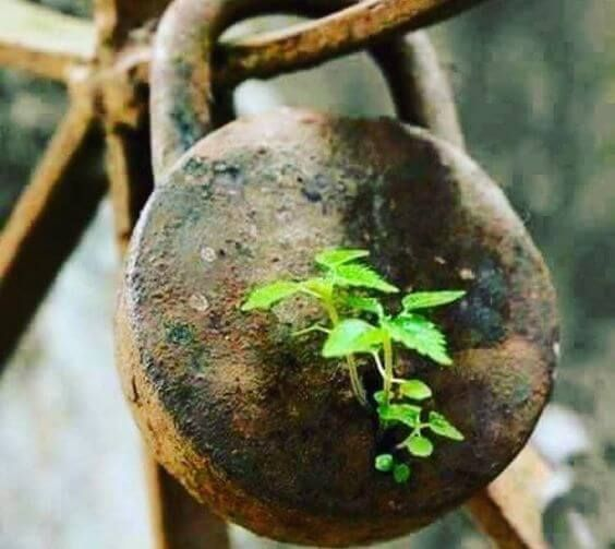 Balance of nature in a never give up perspective [23 Photos]