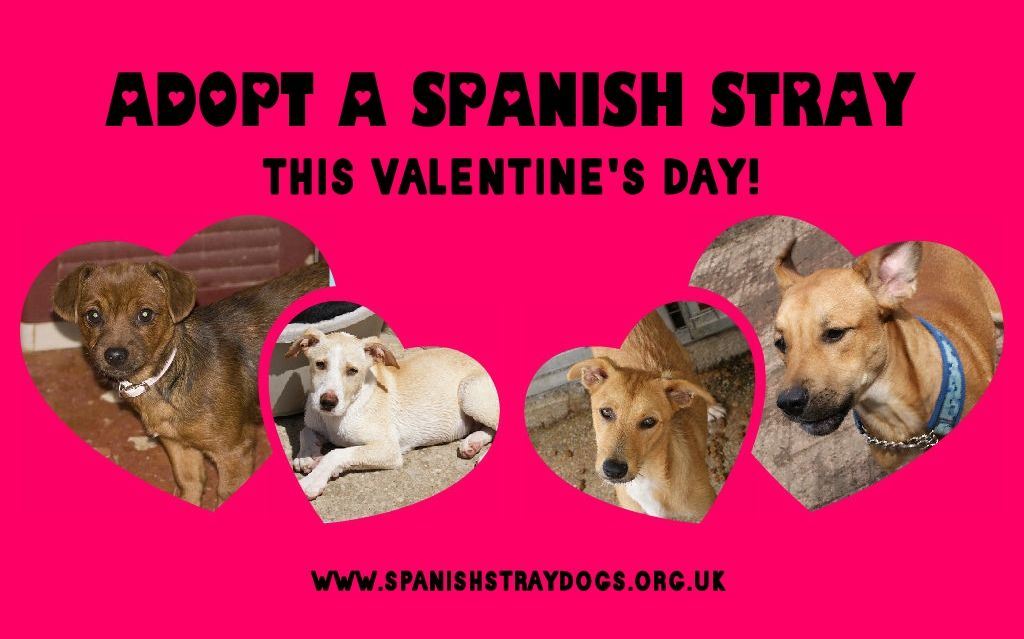 Adopt a Spanish stray this Valentine's Day! Our loveable