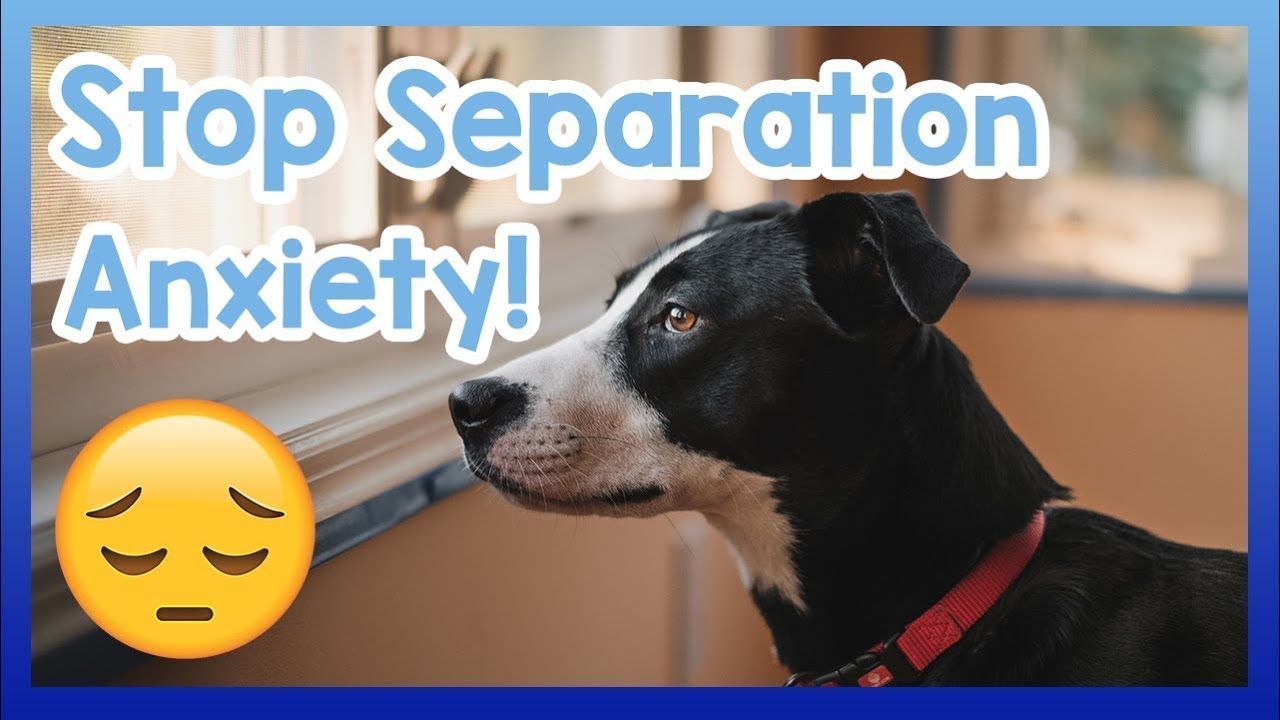 How To Stop Your Dog Suffering From Separation Anxiety Tips To