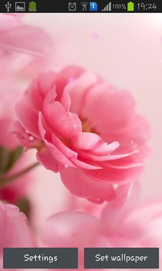 картинки на рабочий стол на весь экран цветы самые красивые живые обои