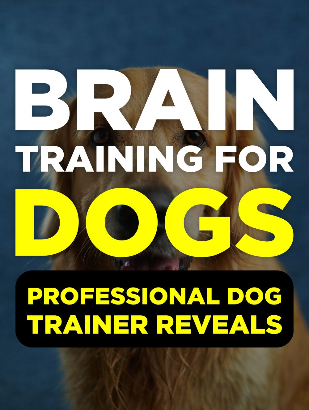 Brain Training For Dogs Review Labrador puppy training
