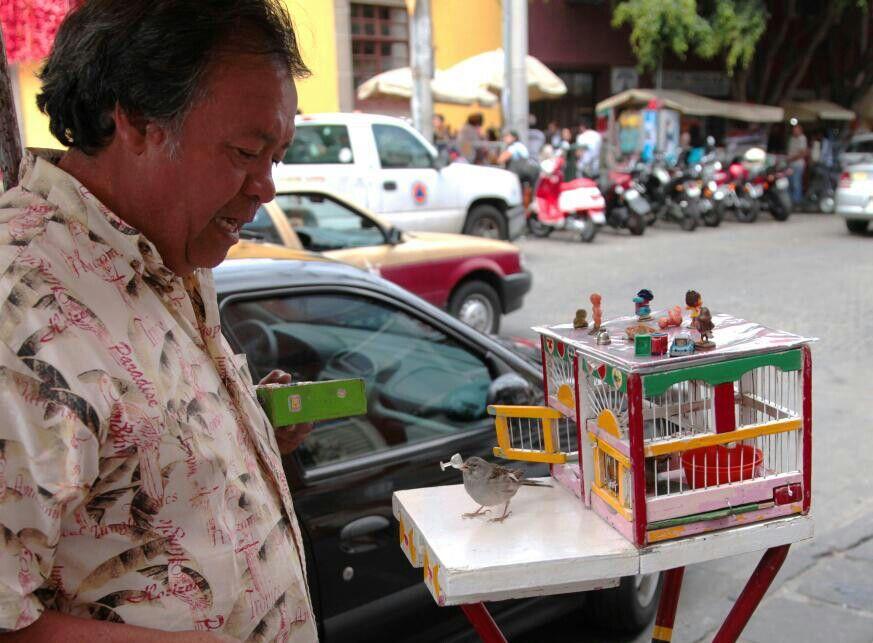 Por unas monedas el pajarito. Le trae un papelito y le trae la suerte. Lindas tradiciones de Mexico.