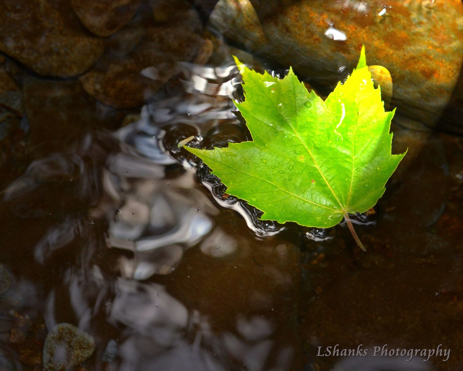 Leaf on the Water by LShanksPhotography on Etsy https://www.etsy.com/listing/113702537/leaf-on-the-water