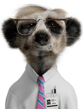 Sergei - Compare the Meerkat | Meerkat, Baby animals, Loveable