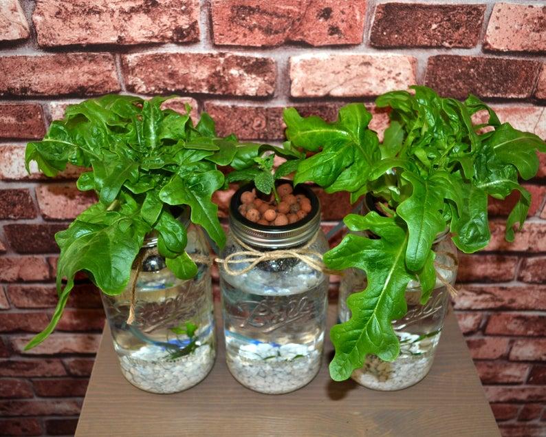 3 Mason Jar Aquaponics Kit Build Your Own Hydroponics Herb ...