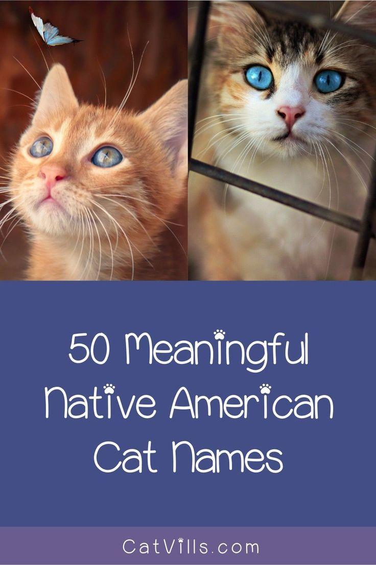 Native American Cat Names in 2020 Cat names, Funny cat