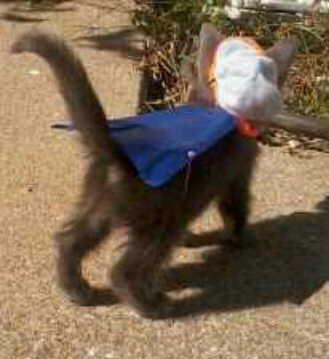 Super kitty to the rescue!