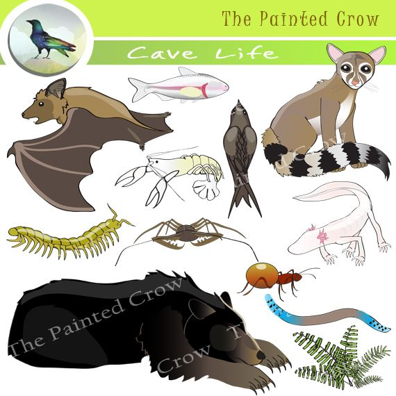 This 26 Piece Cave Life Clip Art Set Features A Variety Of Subterranean Life Includes Trogloxenes Uses Caves For S Clip Art Cave Animals Archaeology For Kids