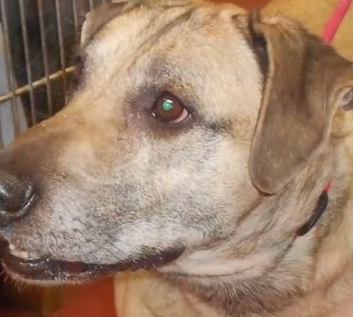 Pet Connect Friday March 13 2015 Pets Labrador Mix Humane Society