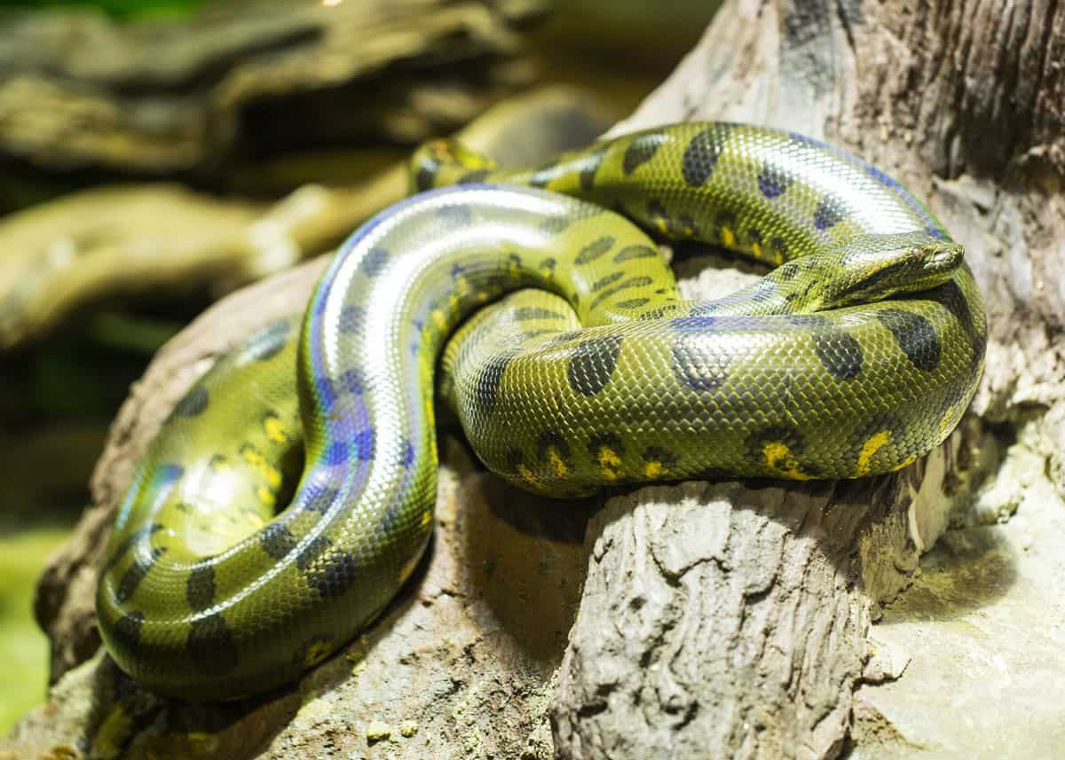 47 Amazon Rainforest Animals Ecuador S Monkeys Birds