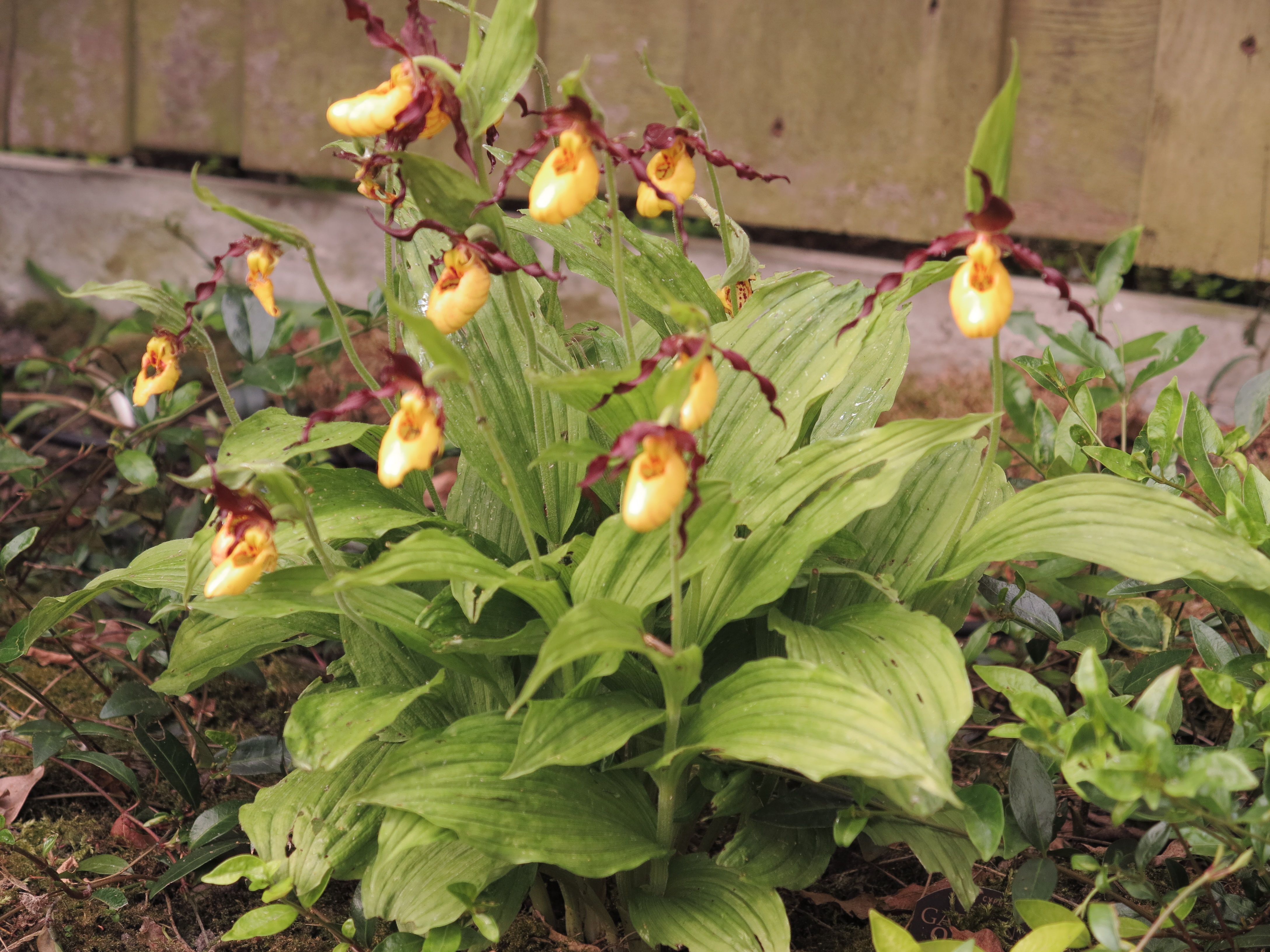 Mijn Tuin: Orchidee