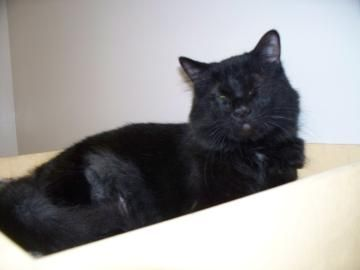 Petango.com – Meet Rodger, a 3 years 10 months Domestic Medium Hair / Mix available for adoption in MARION, IN Contact Information Address 505 S Miller Avenue, MARION, IN, 46953 Phone (765) 618-9293 Website http://WWW.MARIONHUMANE.COM Email manager@marionhumane.com