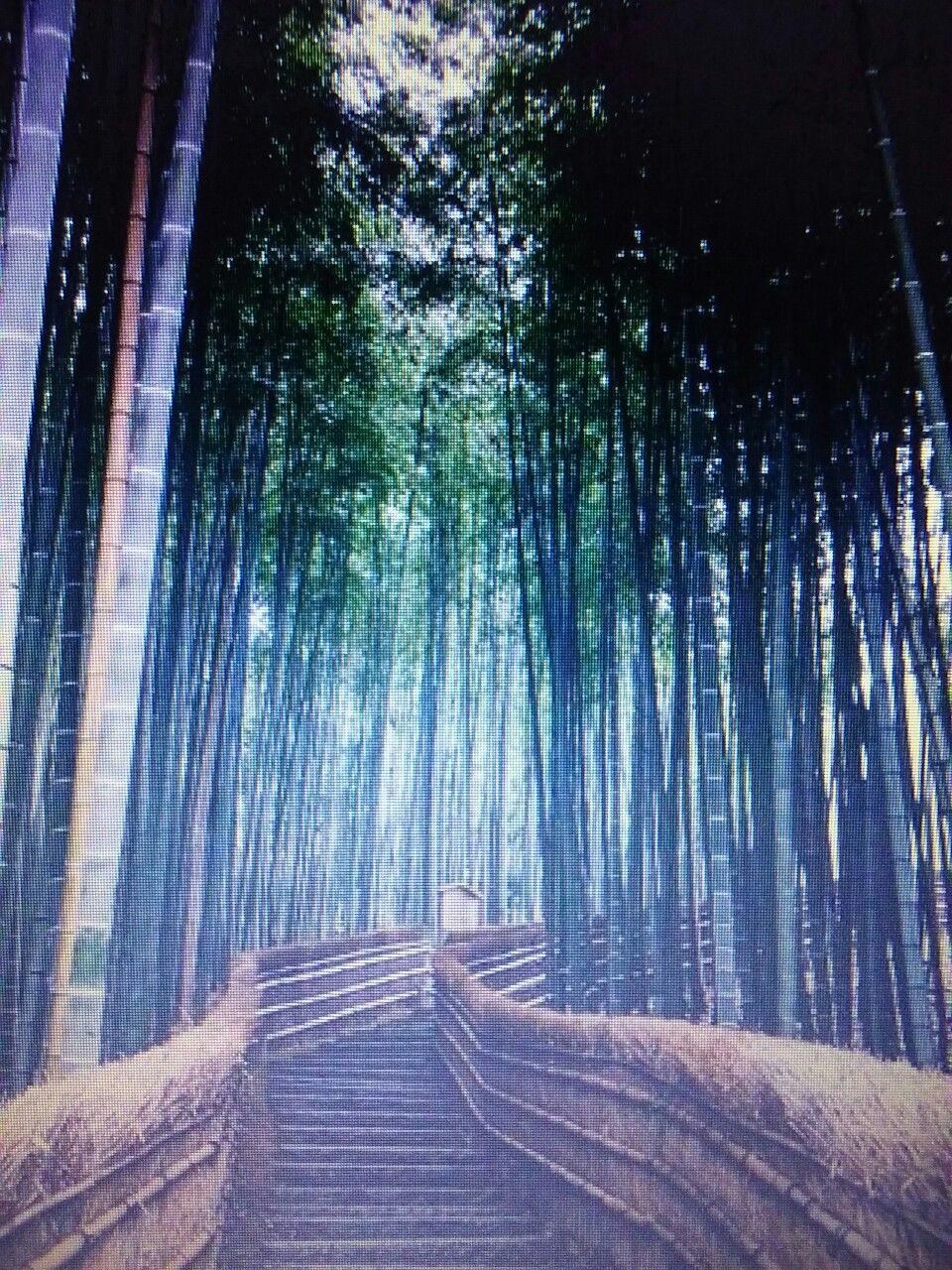 Escalera dentro de un bosque de bambú en Japón.