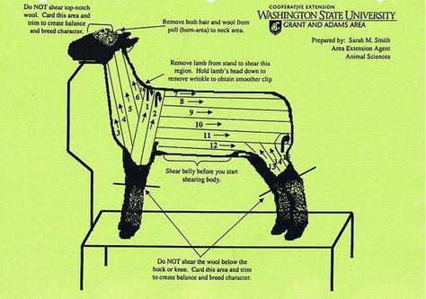 Lamb Diagram Body Trusted Wiring Diagram