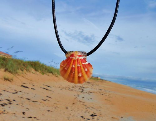 Sunrise colored Calico Sea Shell pendant on black leather cord choker with adjustable clasp from Hammock Life Merchandise...