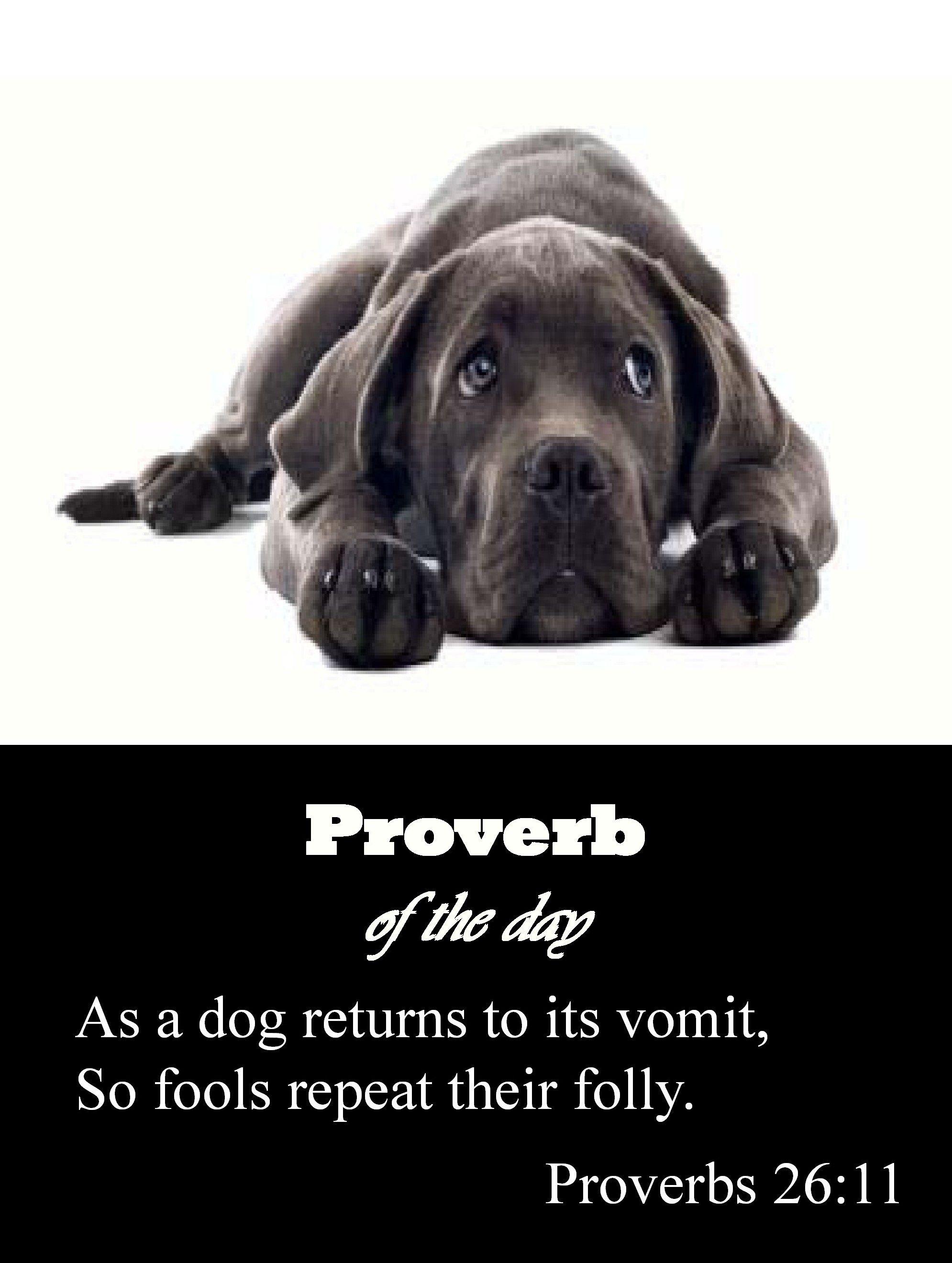 Proverbs 26:11 | Bible proverbs, Book of proverbs, Scripture verses