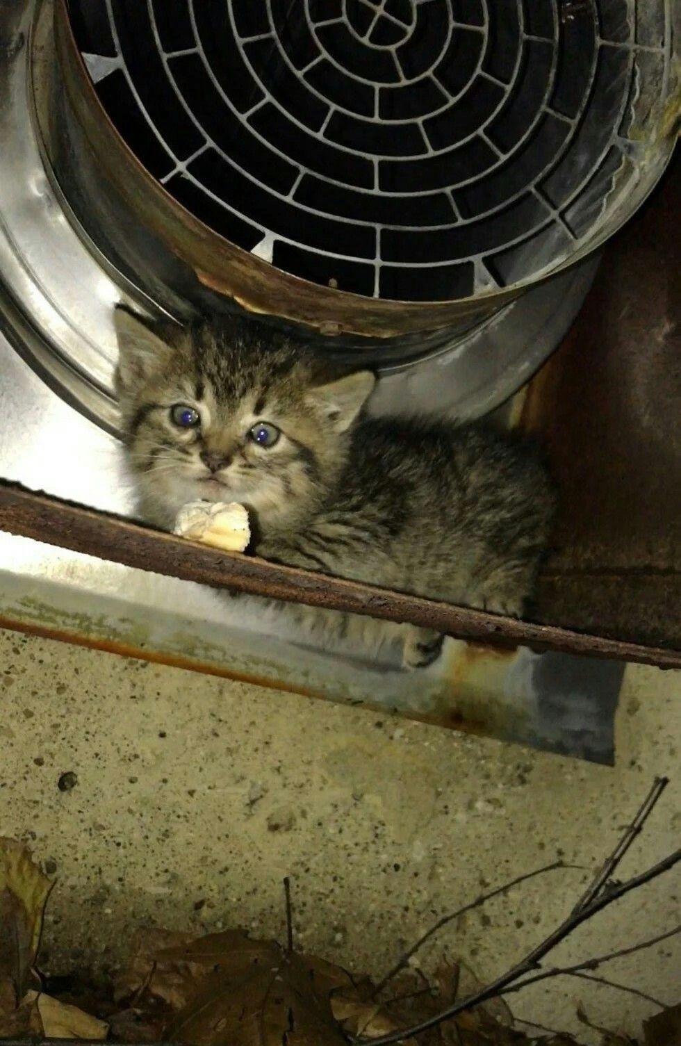 Pin By Rosha Kasravi On Cats Crazy Cats Tabby Kitten Kittens