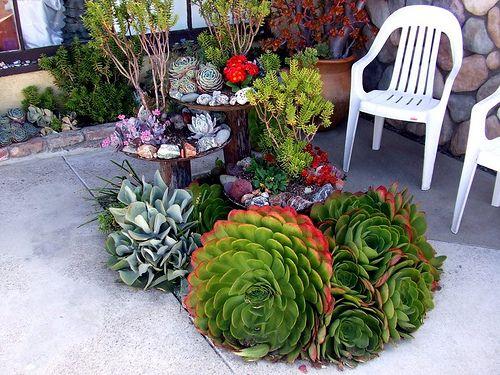 how to grow succulent outdoor
