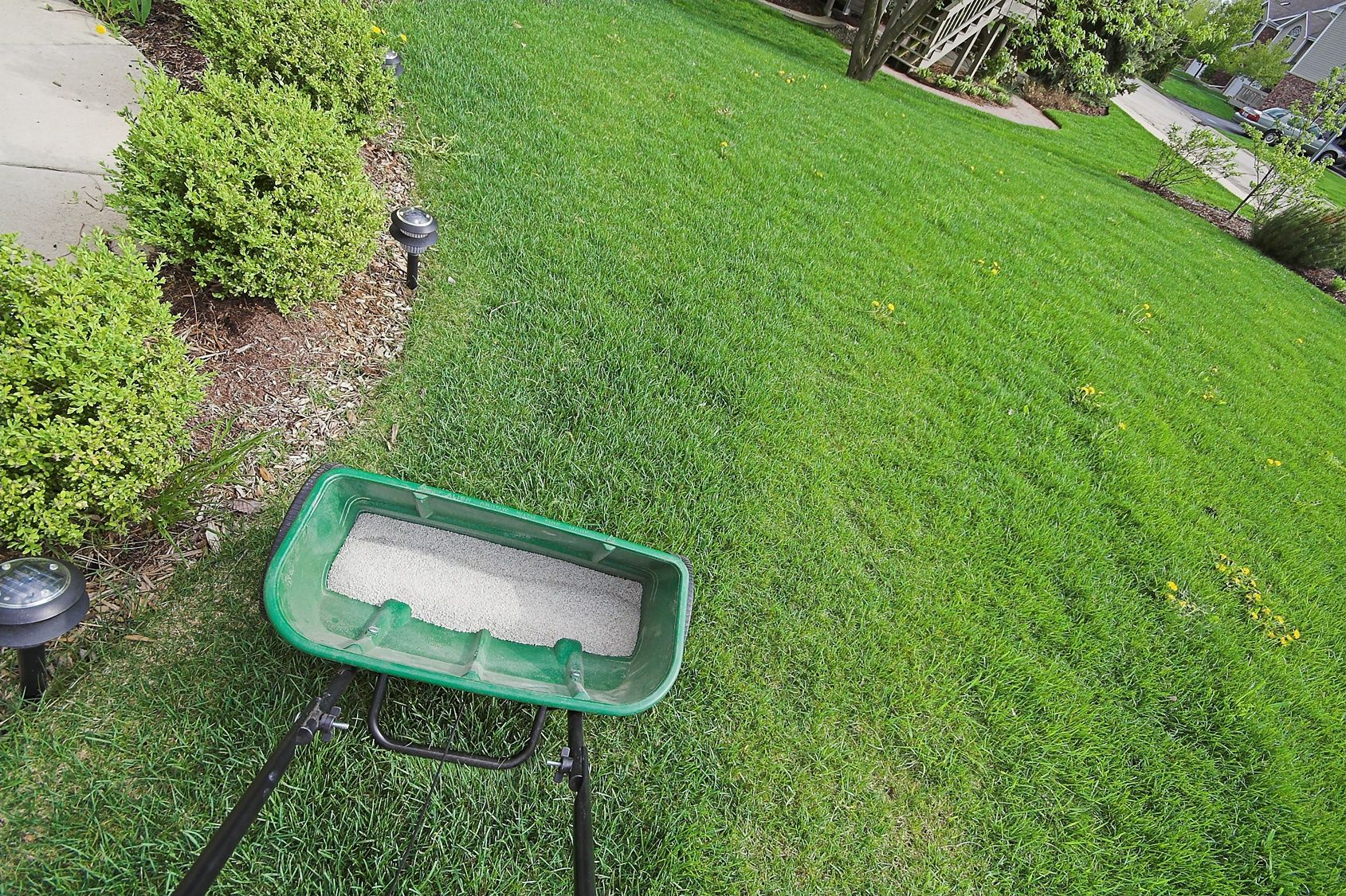 how often to aerate buffalo lawn