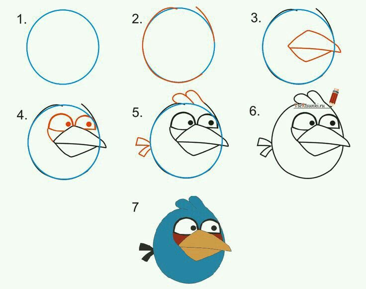 Angry bird basic drawingdrawing