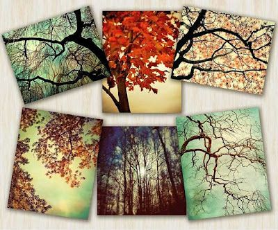 WinnerDogFinds: Set of 6 Photography Prints of Trees