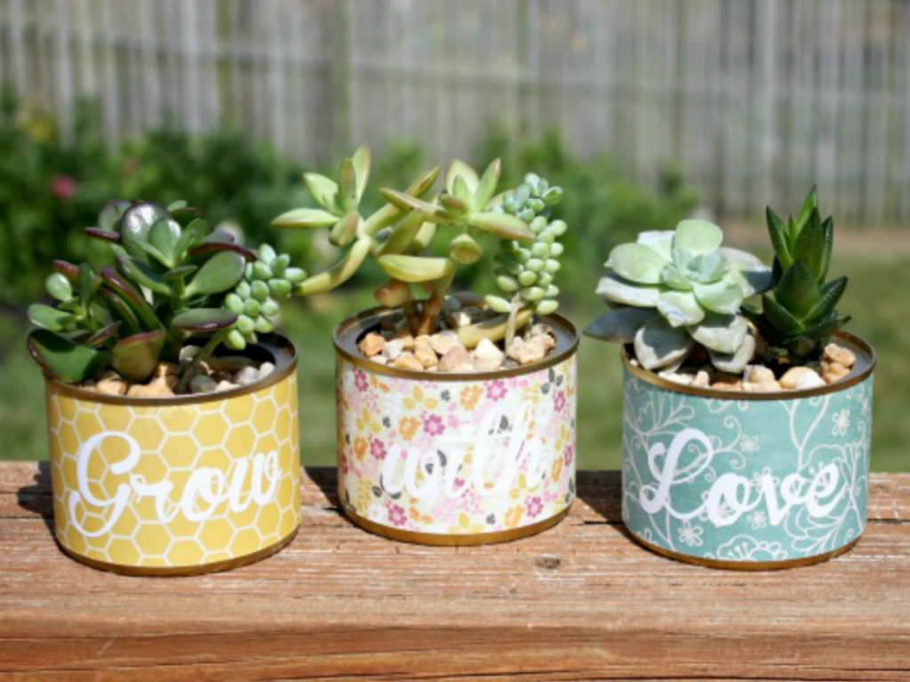 It 39 s possible to grow succulents in pots without drainage Planters for succulents