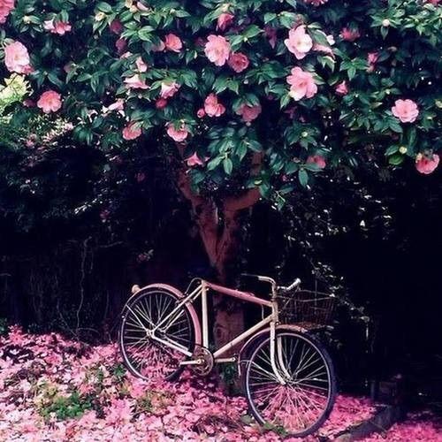 Imagen vía We Heart It https://weheartit.com/entry/169359688 #bicicleta #color #flores #hermosura