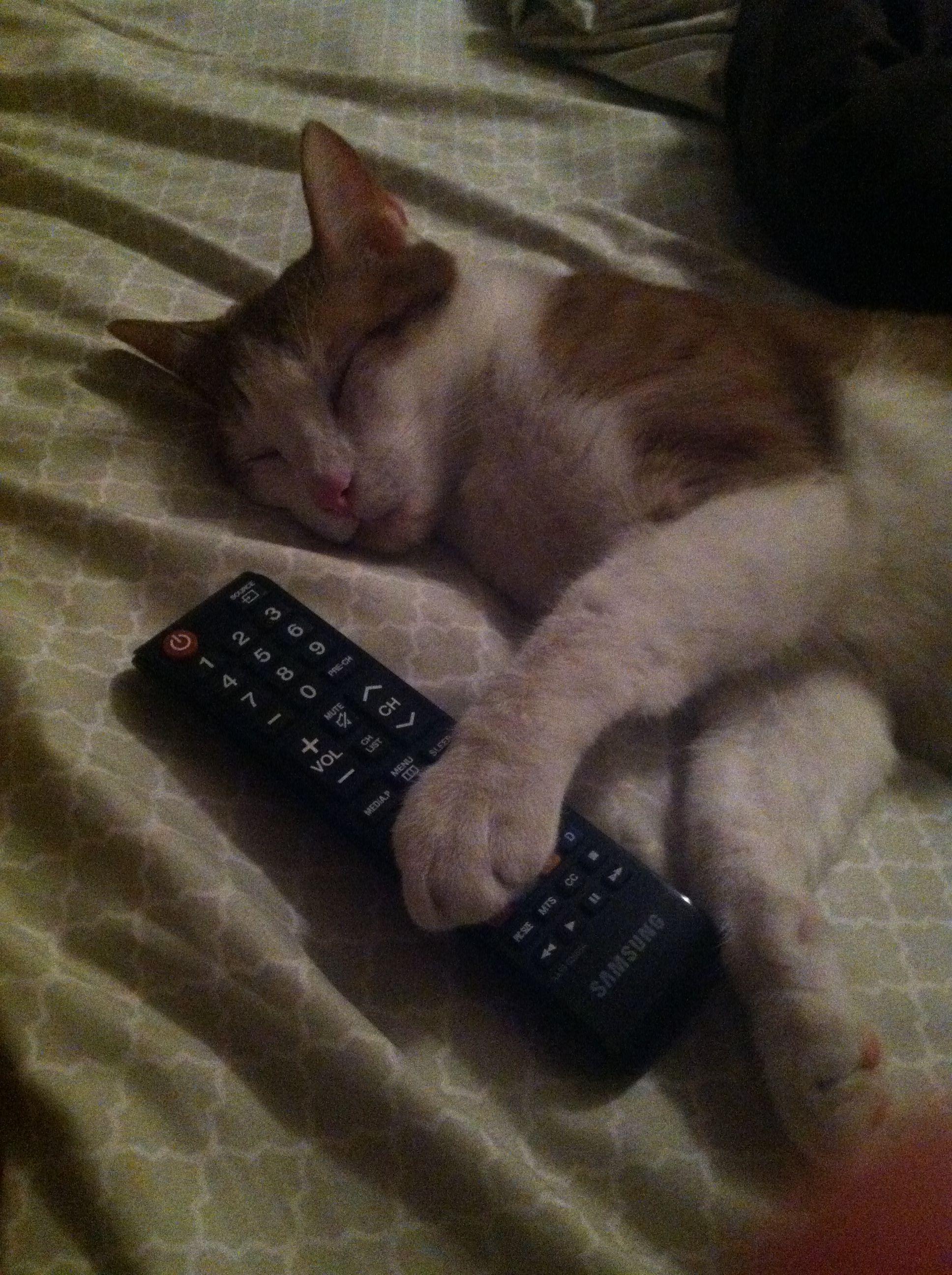 My Kitten Fell Asleep Like This Cat Memes How To Fall Asleep Kittens