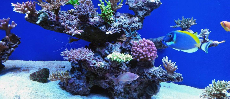 Acuarios Marinos Buscar Con Google Fish Pet Aquarium Pets