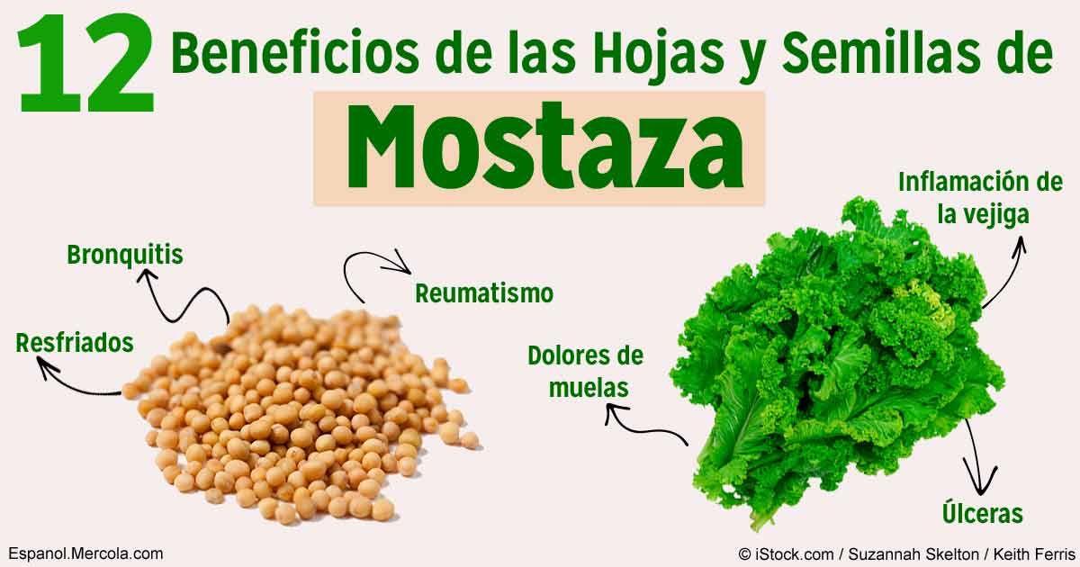 Las hojas y semillas de mostaza ofrecen poderosos for Informacion sobre el granito