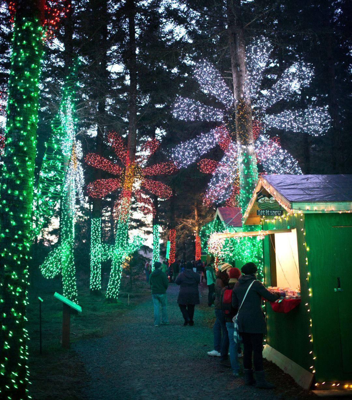 Image Courtesy Of The Oregon Garden Best Christmas Lights Oregon Garden Christmas Lights Photoshoot
