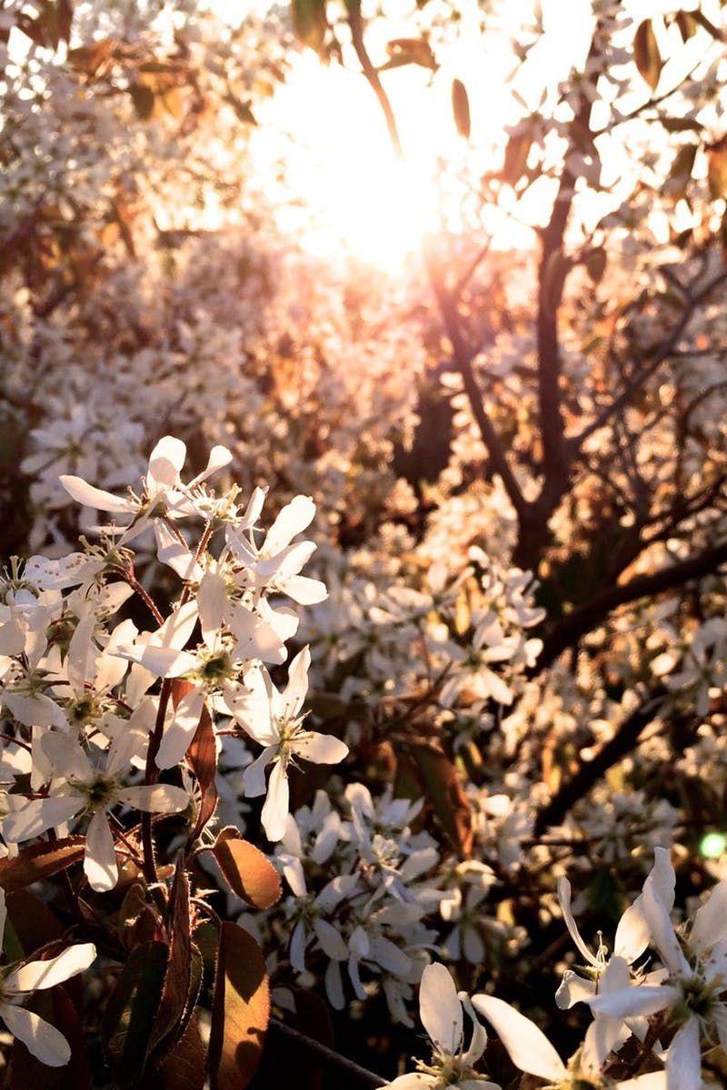 Free stock photo of sunshine, spring, tree, blooms