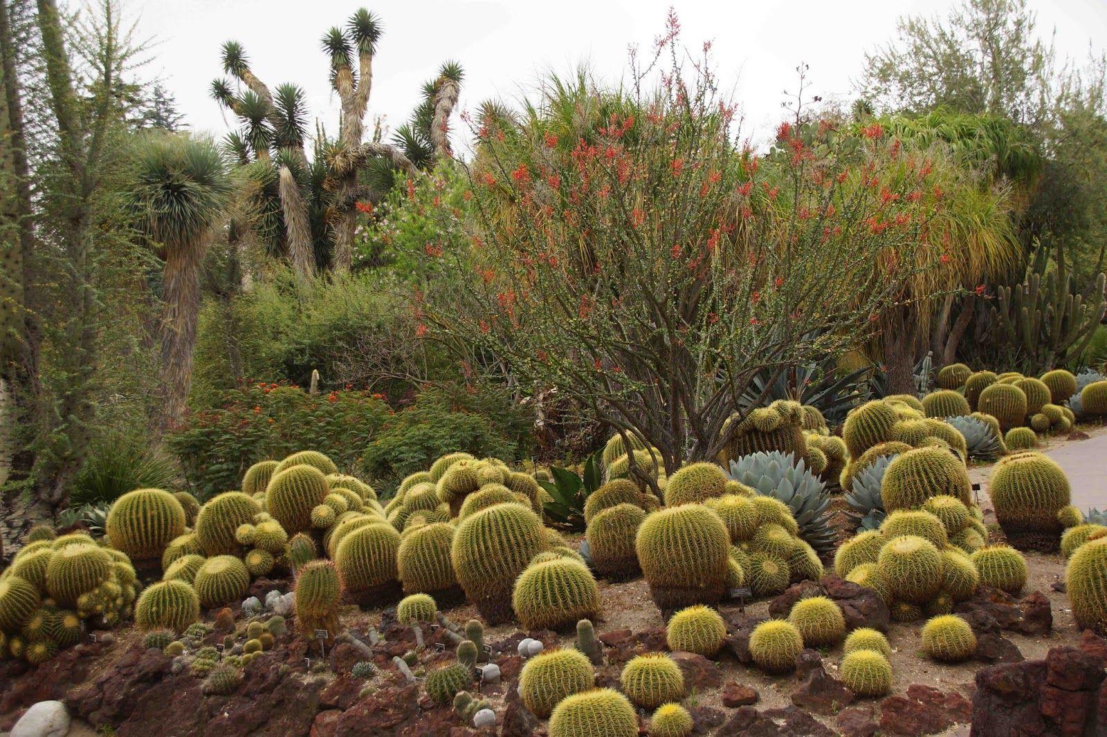 What S Up At The Huntington At May S End Jardines Suculentas Jardin Suculentas