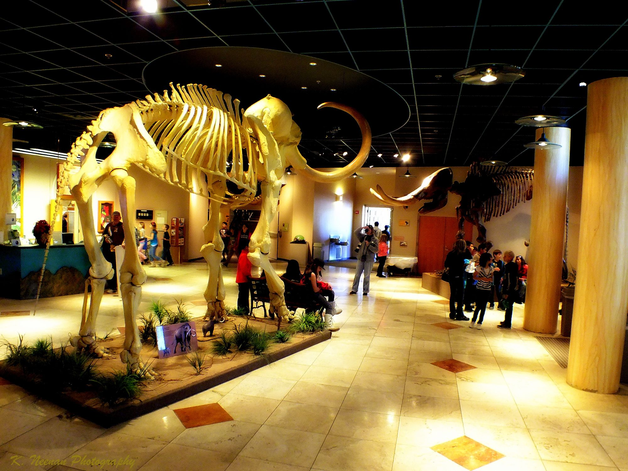 Mesa, AZ - The Arizona Museum of Natural History. I LOVE this museum. Guys,  you do not understand how cool it is. There are animatronic dinosaurs in a  huge ...