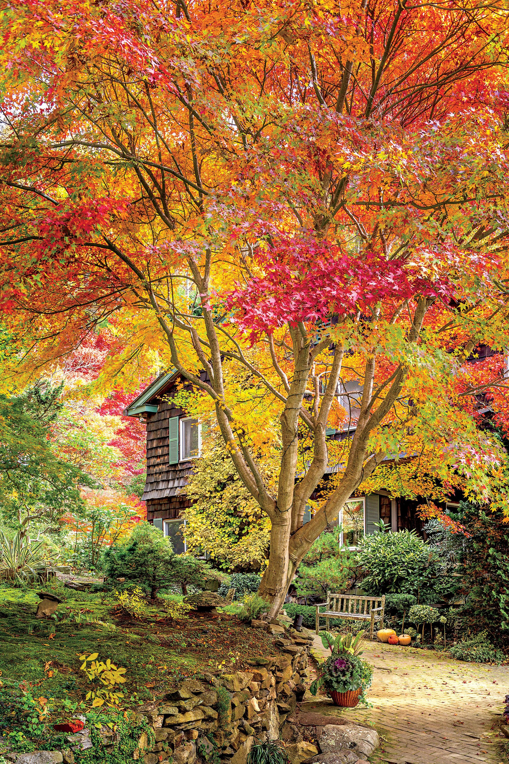 Paint the Fall with Color Garden pictures, Autumn garden