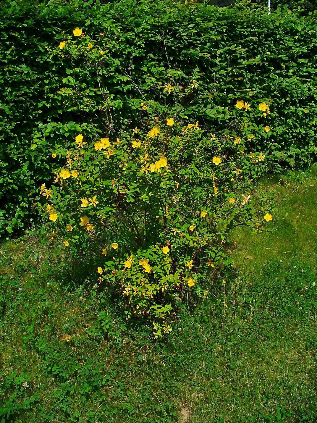 62 Neu Botanischer Garten Karlsruhe In 2020 Botanischer Garten Diy Gartenbau Vorgarten