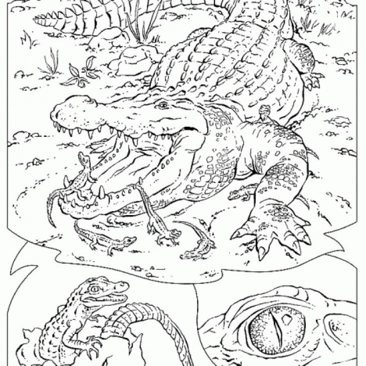 Highly detailed and realistic crocodile coloring page